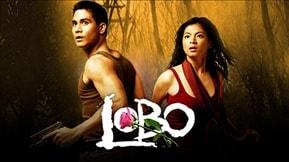 Lobo 20080709
