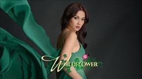 Wildflower 20170818