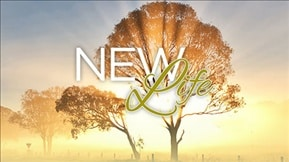New Life 20170414